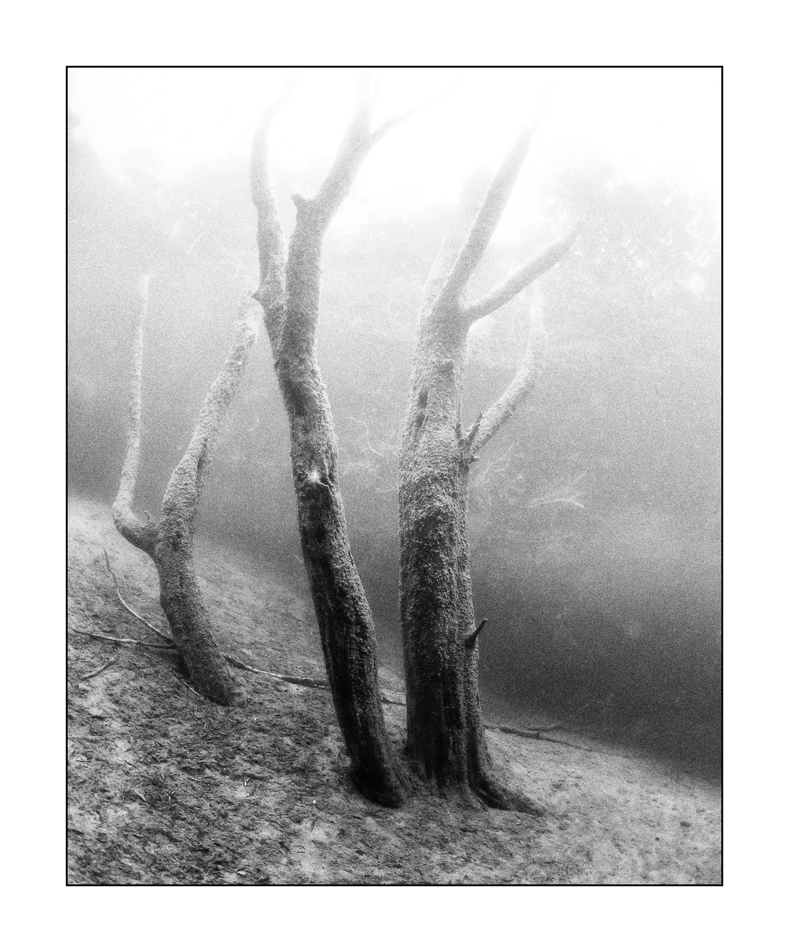 Im Wald, monochrom