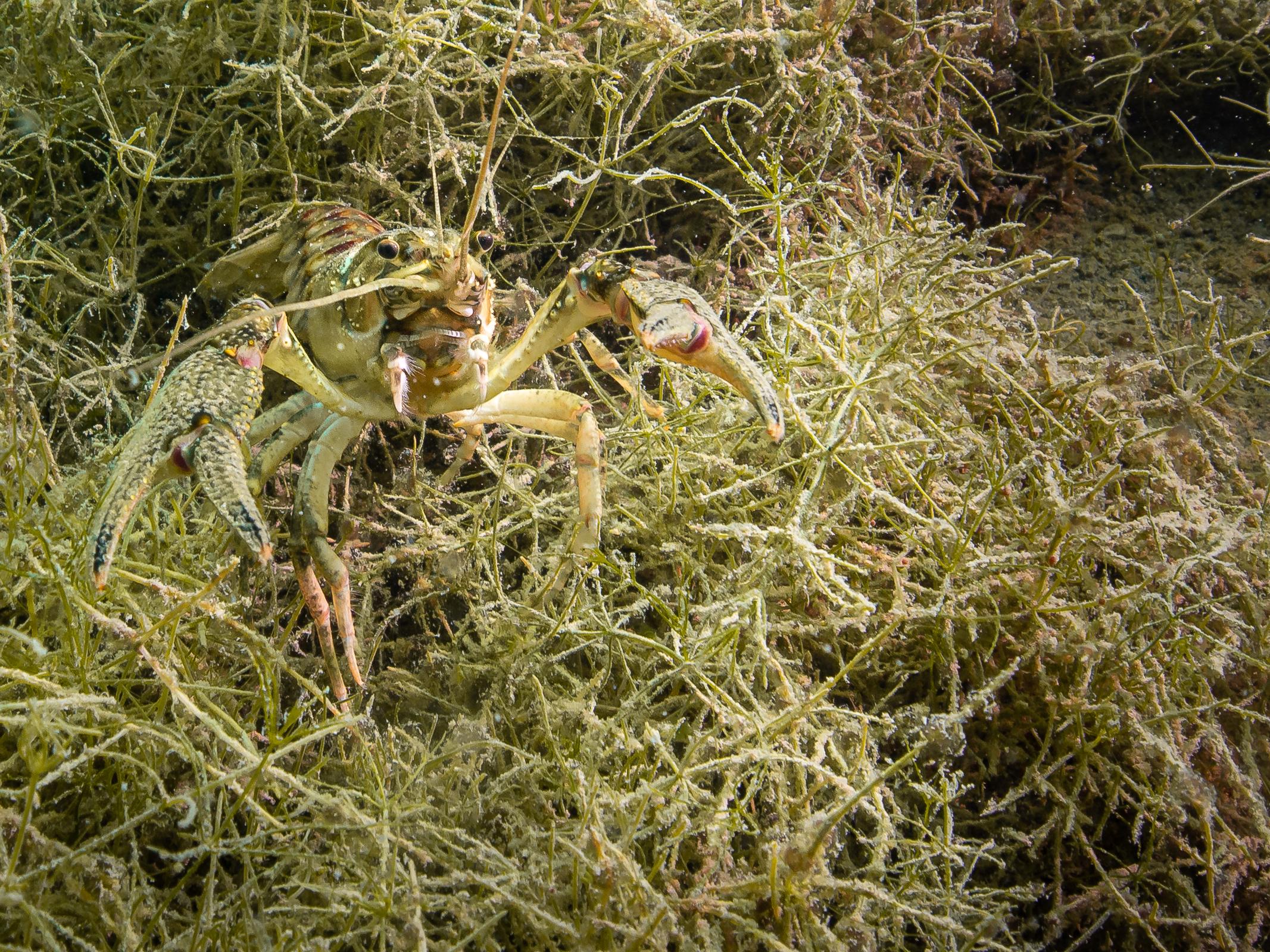 Baggersee Giesen