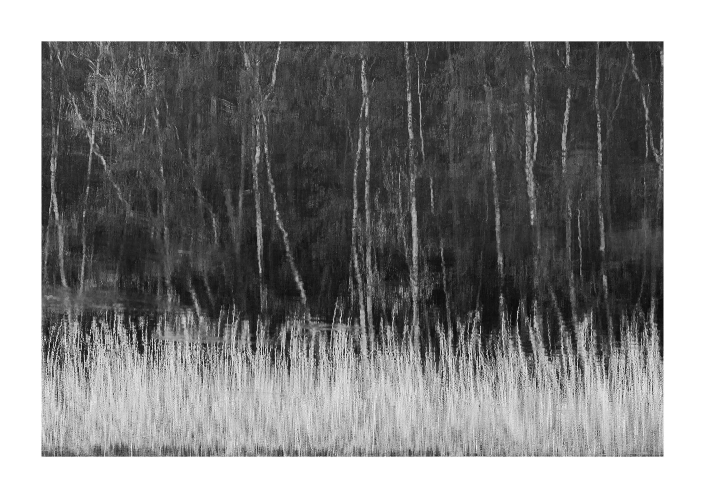 Birken an Gräsern