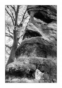 Felsiger Wald