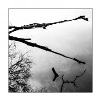 Frühling am Spießweiher