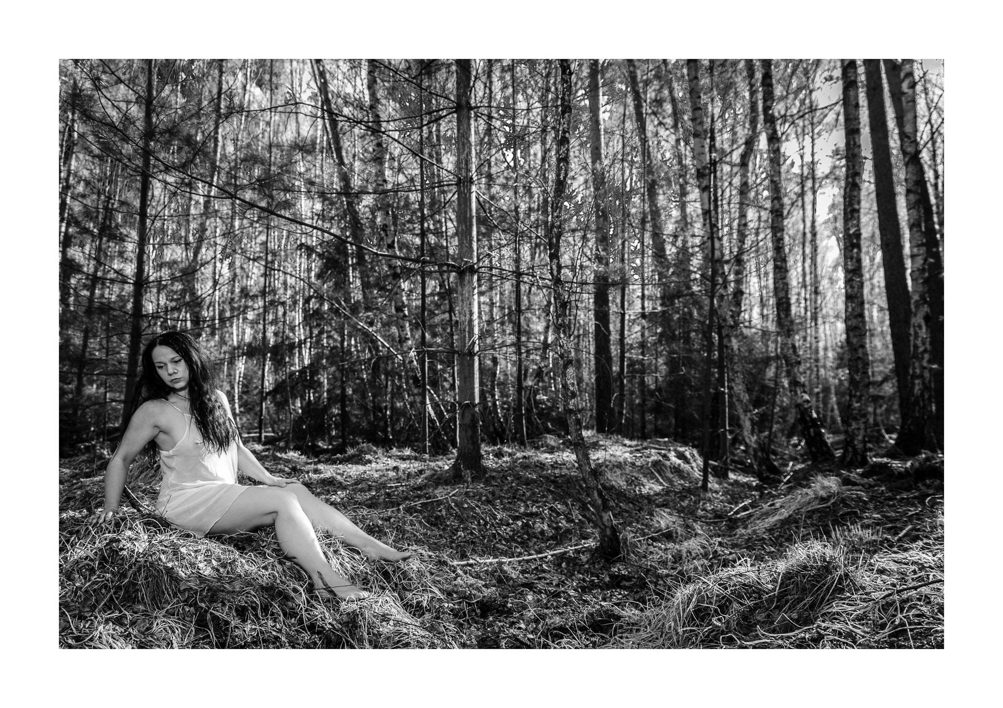 Frühlingsmärchen im Birkenwald