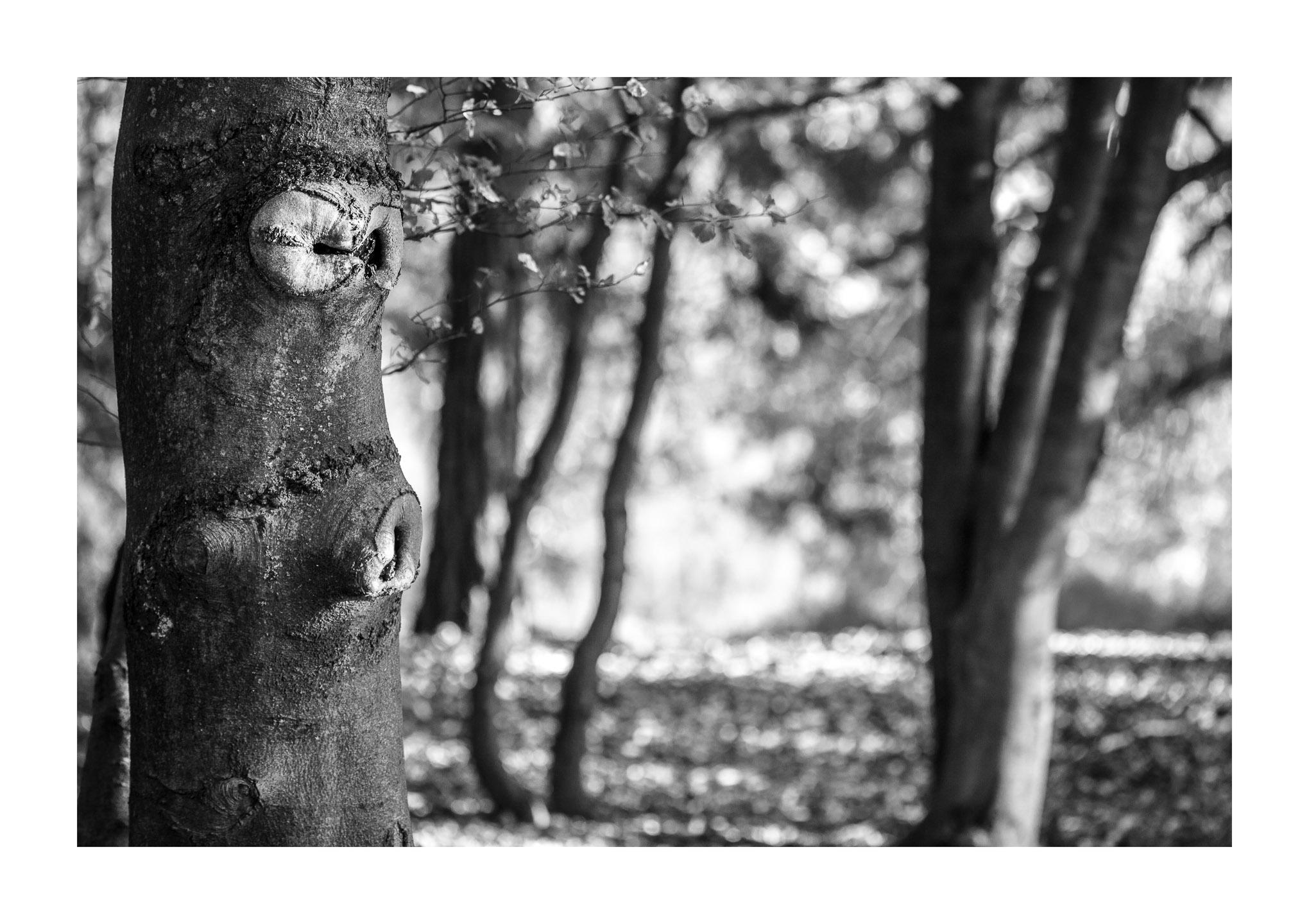 Gesicht des Herbstes