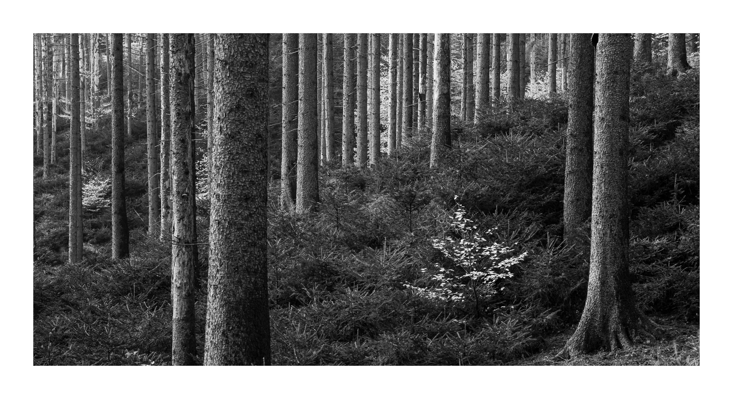 Im sterbenden Wald