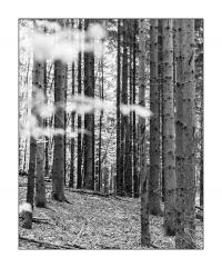 Details aus dem herbstlichen Wald