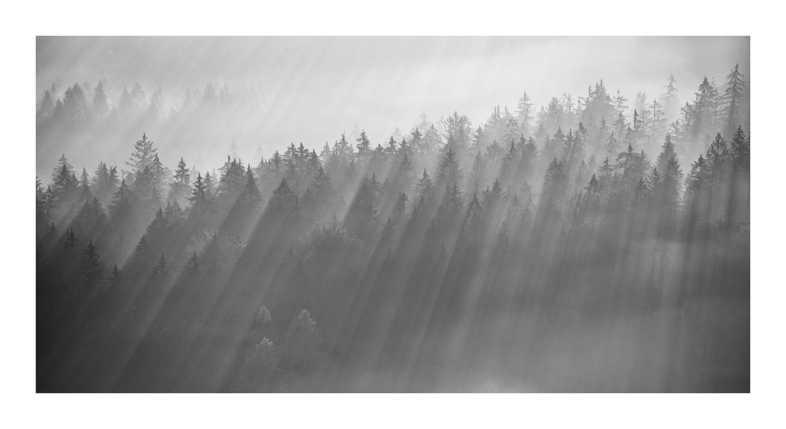 Sächsische Schweiz frühmorgens