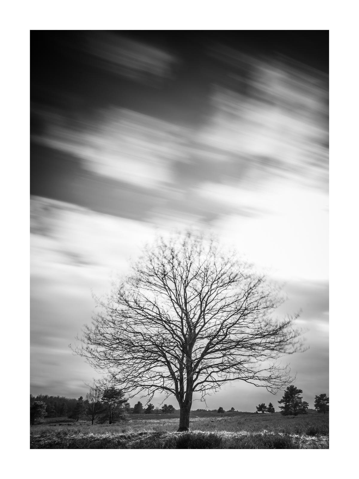 Baum - Mehlinger Heide
