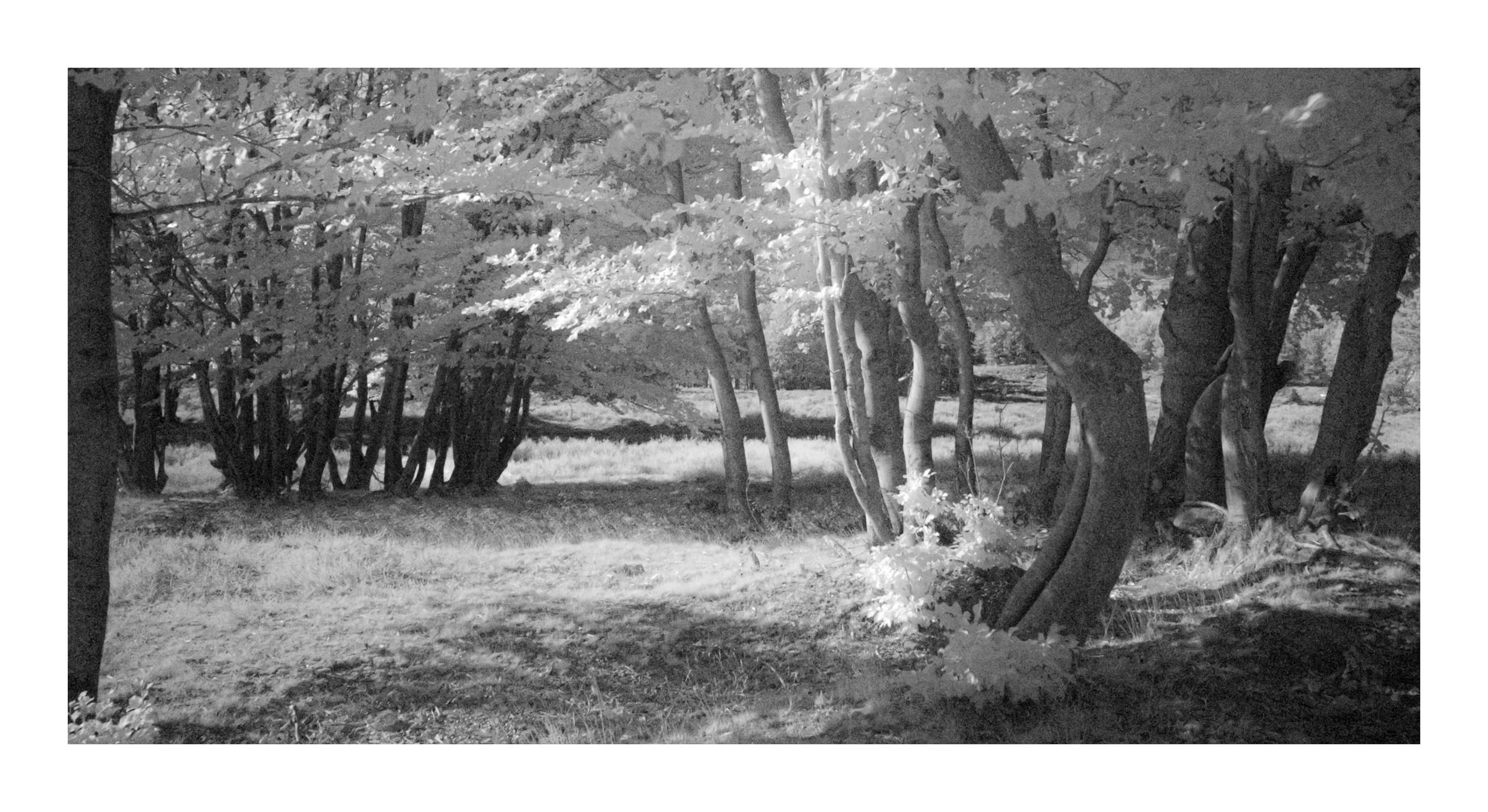 Mehlinger Heide, Infrarot