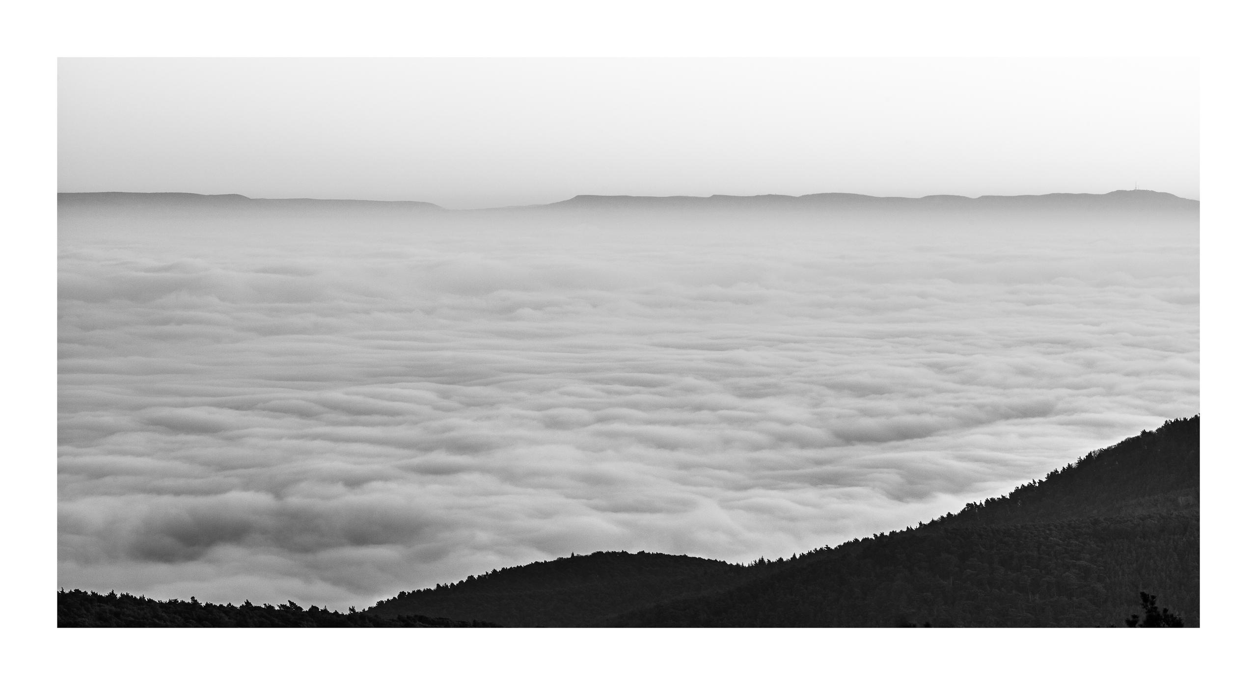 Nebel über der Pfalz